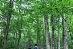 Nine Corners Lake trail in the Adirondacks