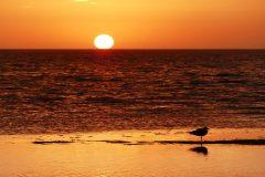 Sunrise with seagull
