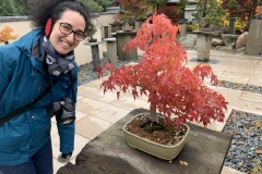 Japanese maple bonsai. Tourist for scale.