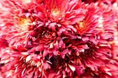 Close up on some victorian floral arrangements