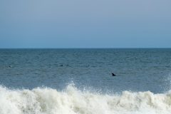 Dolphins appeared all up and down the shore.