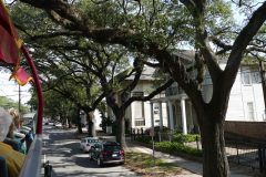 Mardi Gras trees in the Garden District