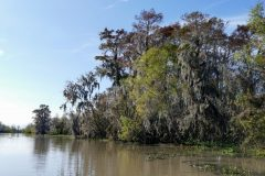 Swamps have a lot more tall trees than we realized.
