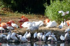 So many birds! Ibis, flamingoes, and white pelicans.