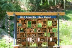Bee motel on the UNC Asheville campus