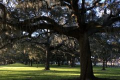 Park with live oak and spanish moss