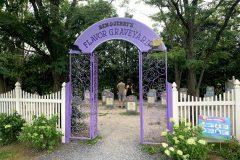 The Flavor Graveyard
