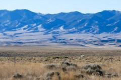 Pronghorn buck in the vastness of Wyoming