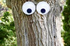 The trees are watching