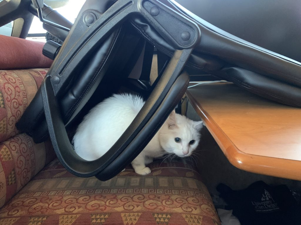 Lilly the cat on a bench under a chair
